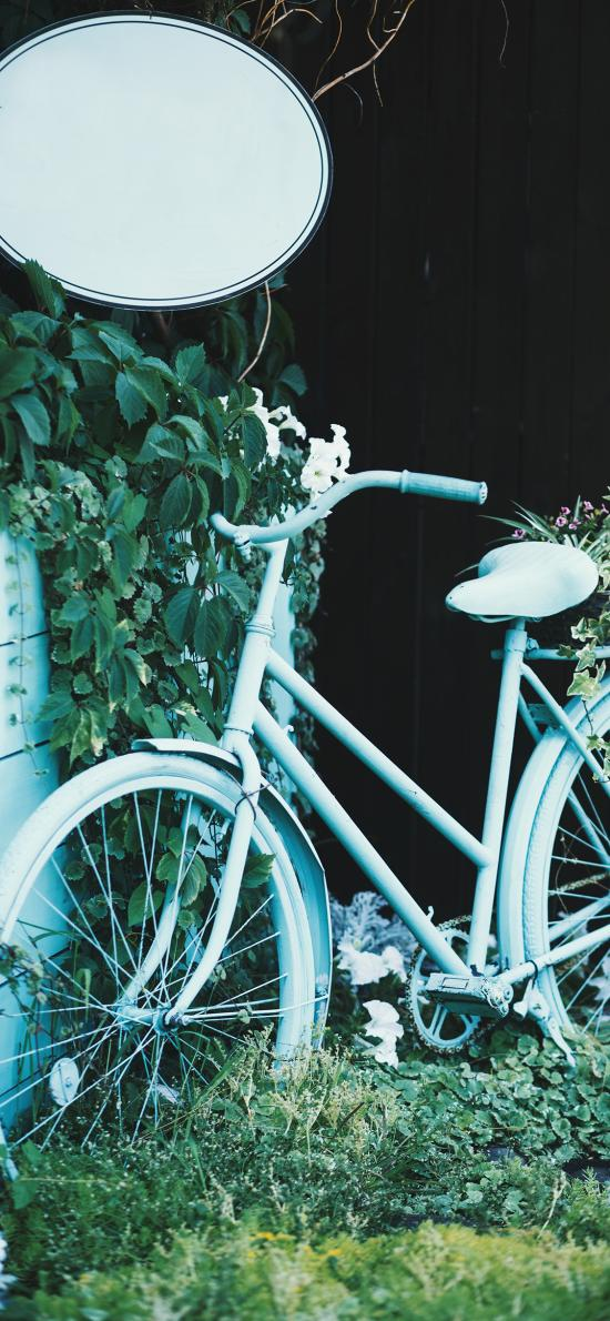 单车 纸杯 绿植 自行车