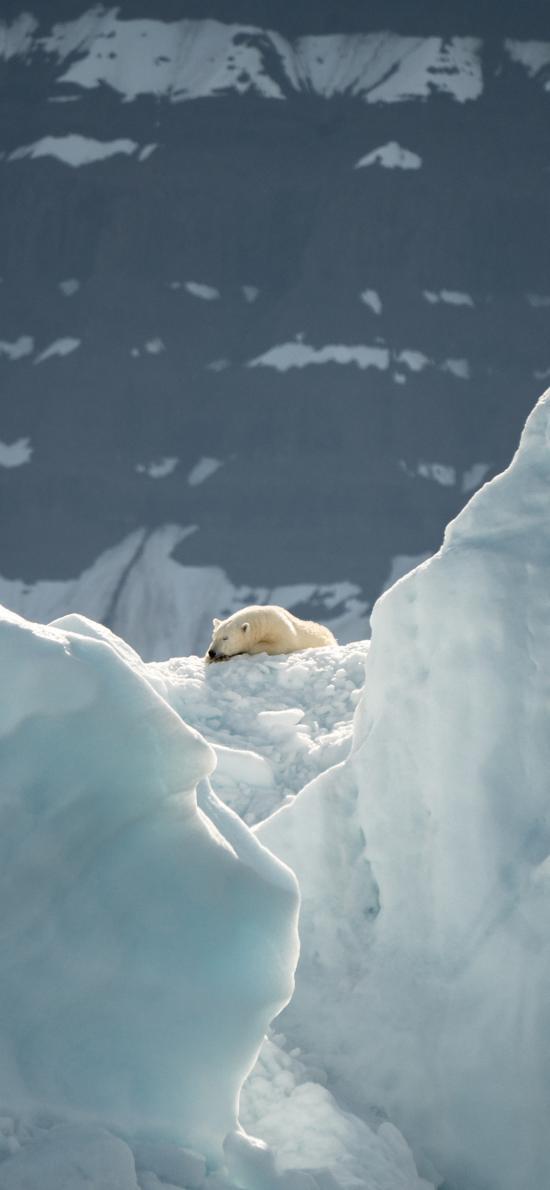 北极熊 冰川 极地 冰雪