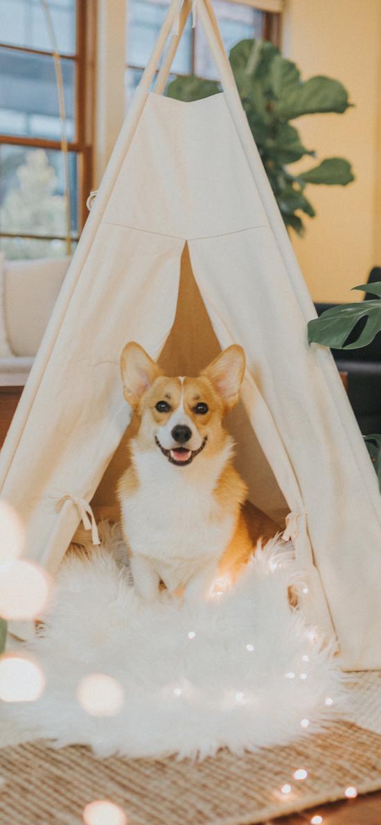 柯基 室内 家居 帐篷 温馨