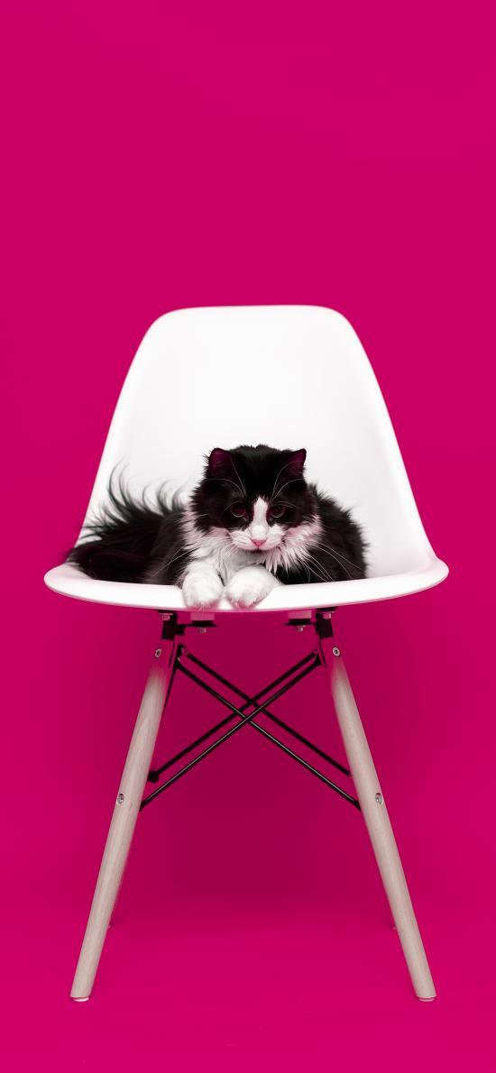 猫咪 宠物 椅子 玫红