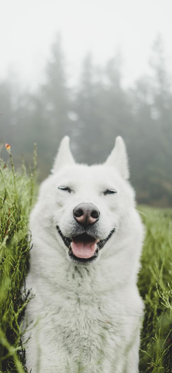 草地 户外 狗 宠物 笑脸