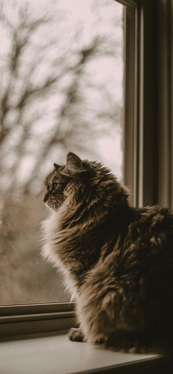 窗台 猫咪 喵星人 宠物