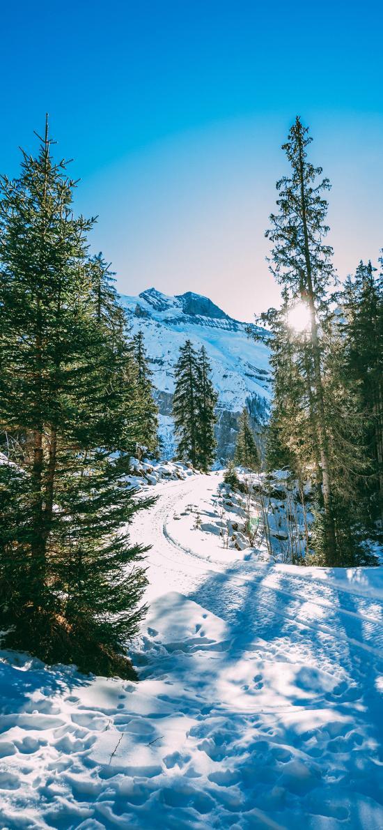 郊外 冬季 雪景 树木