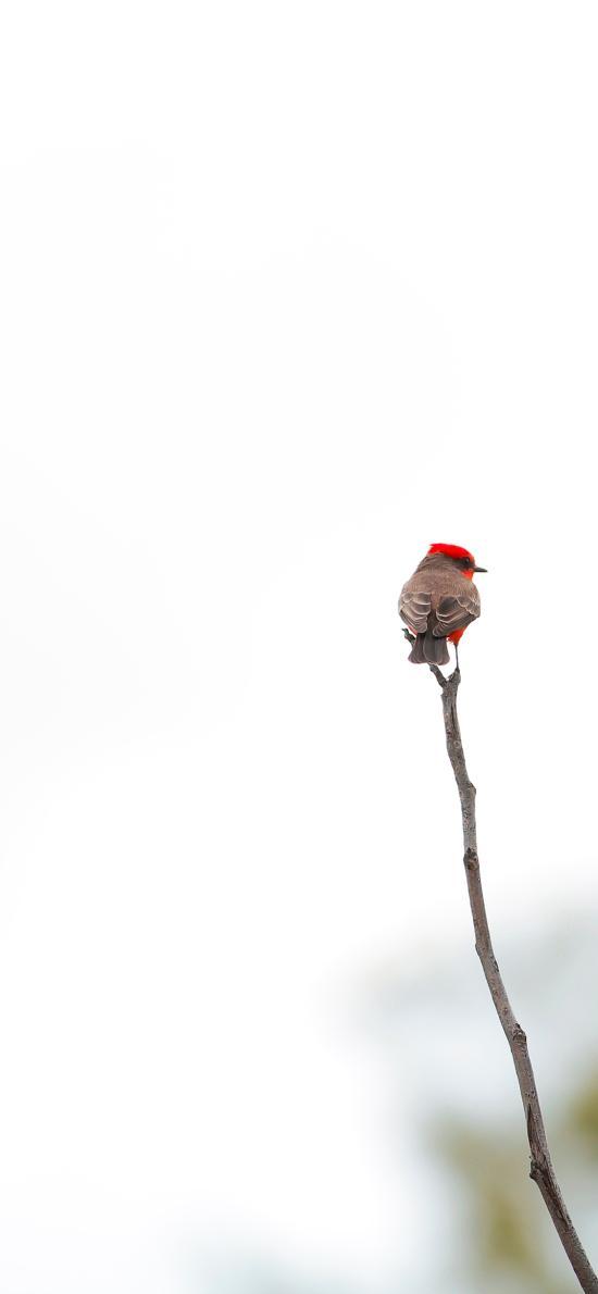 小鸟 飞鸟 树枝 枝头