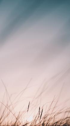 郊外 草丛 朦胧 唯美