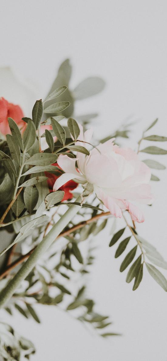 鲜花 花束 插花 花瓶 枝叶