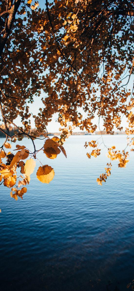 湖泊 枝叶 枯黄 唯美 自然