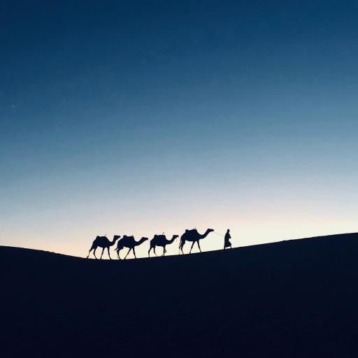 沙漠 行走 骆驼队伍