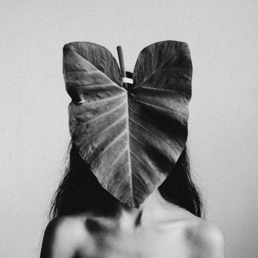 黑白 艺术 树叶 遮掩 露肩