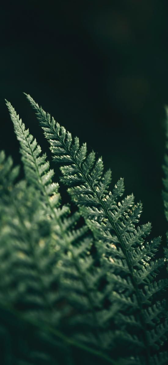 绿植 蕨类植物 潮湿 阴暗