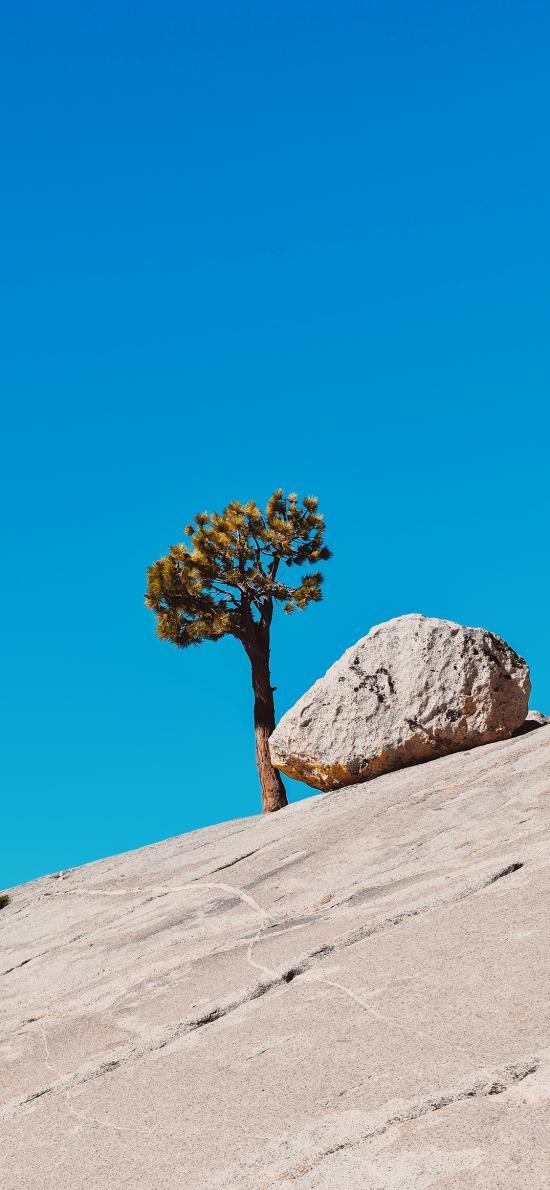 树木 岩石 斜坡 蔚蓝 天空
