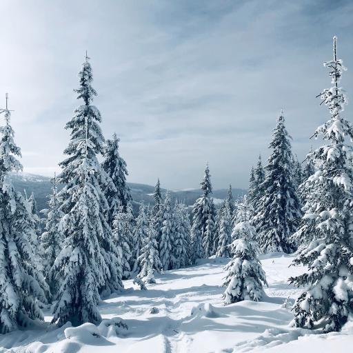 郊外 冬季 雪景 唯美
