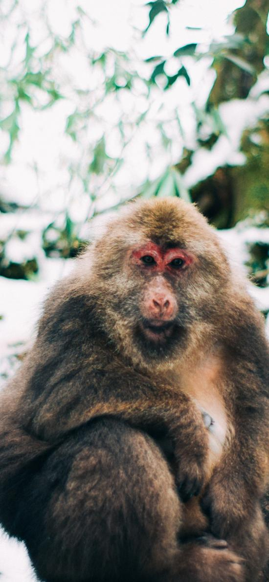 猴子 树干 灵长类 皮毛