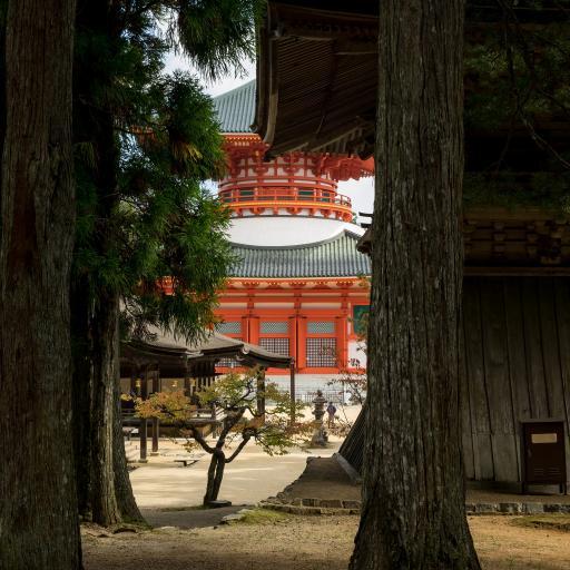 庭院 树木 建筑 寺庙