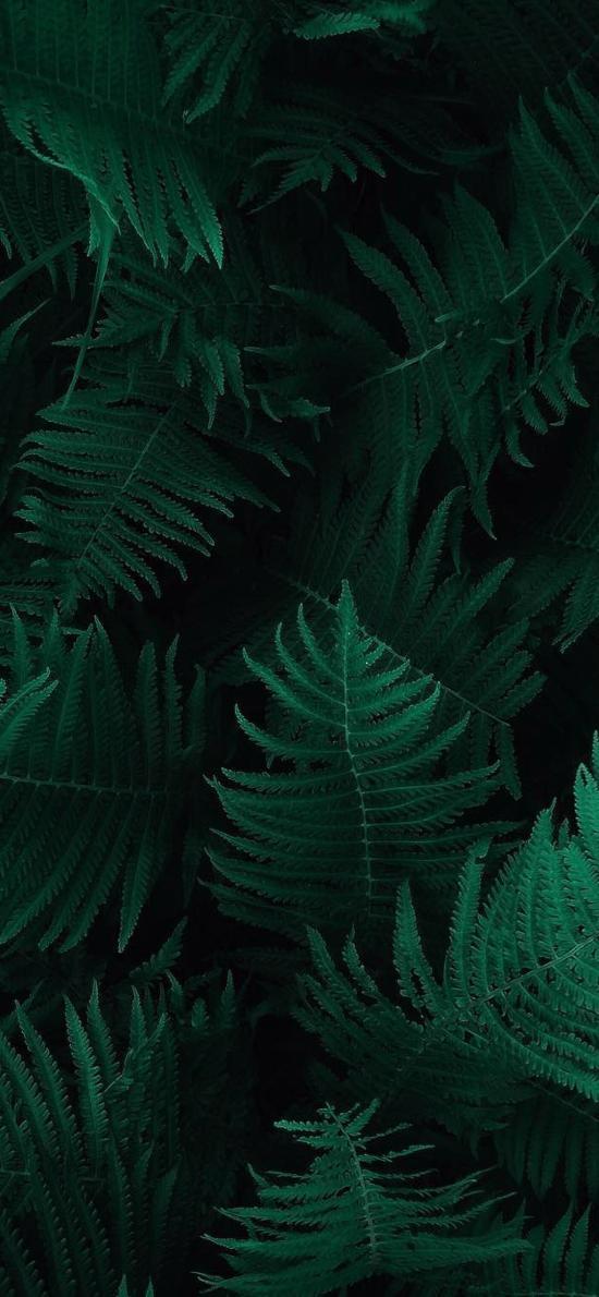 叶子 植被 绿色 绿化