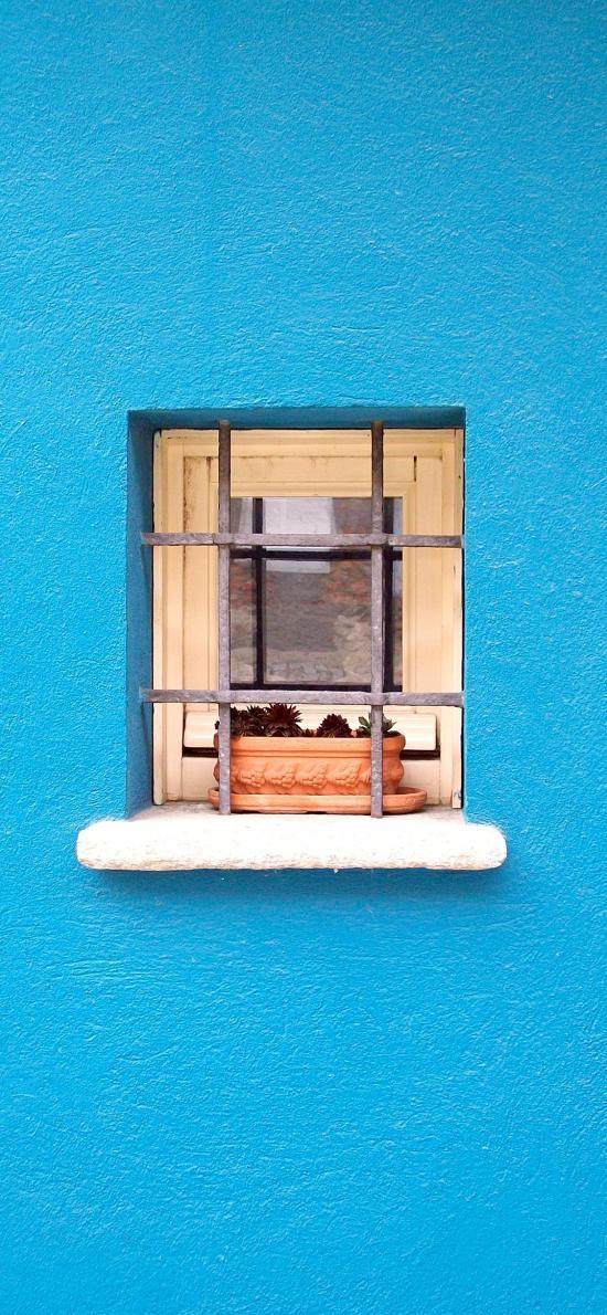 蓝色墙壁 窗户 盆栽 多肉