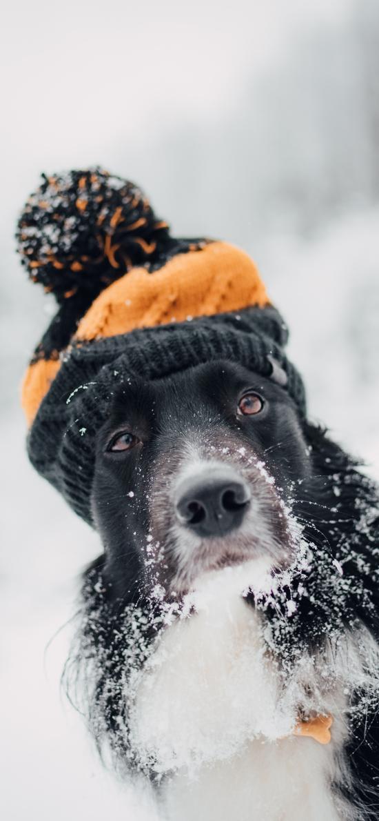 宠物 帽子 雪季 雪地