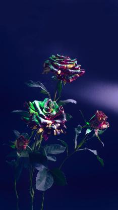 鲜花 玫瑰花 上色 金粉