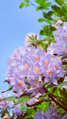 花簇 盛开 鲜花 枝叶