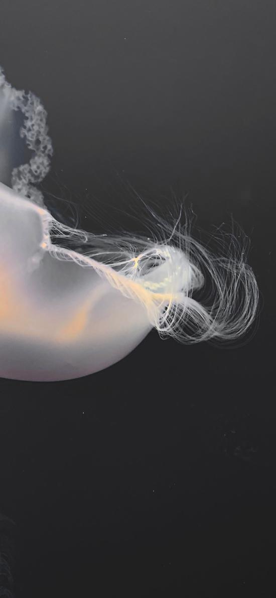 浮游 透明 水母 海洋生物