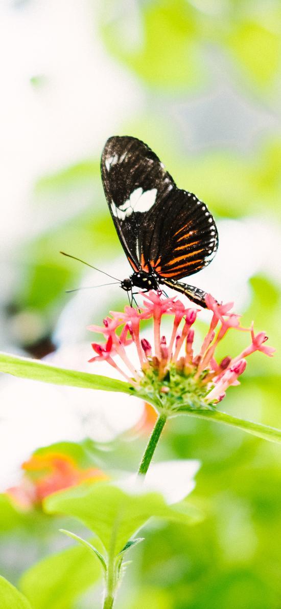 蝴蝶 昆虫 采蜜 小花 清新