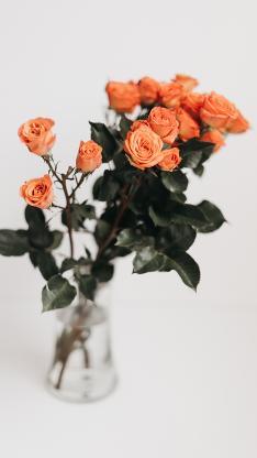 玫瑰 花束 鲜花 花瓶