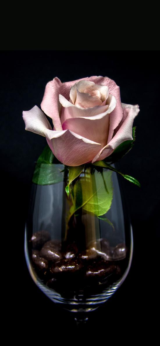 鲜花 玻璃杯 酒杯 玫瑰