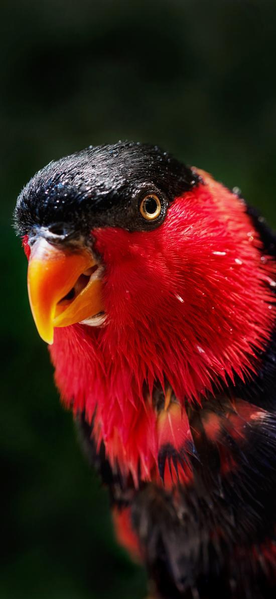 鸟类 羽毛 鲜艳 红