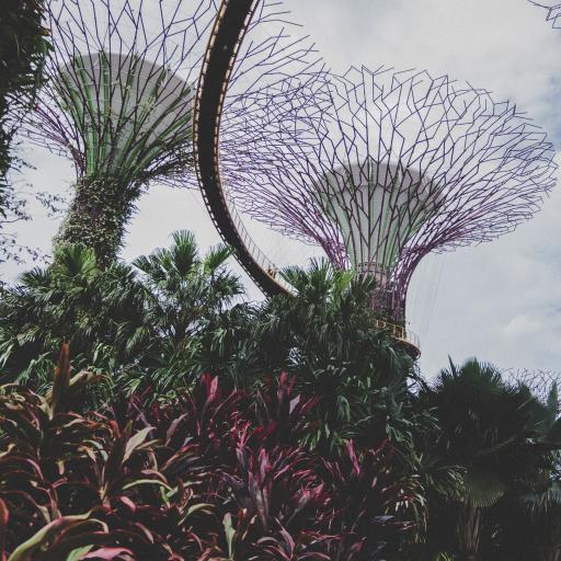 滨海湾花园 地标 建筑 新加坡