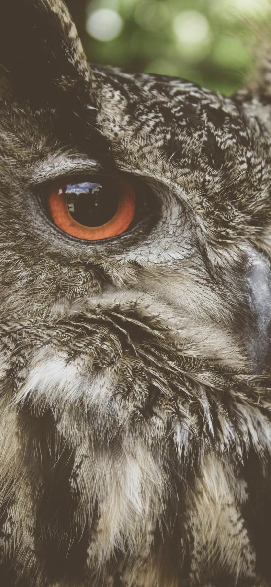 猫头鹰 羽毛 瞳孔 夜视