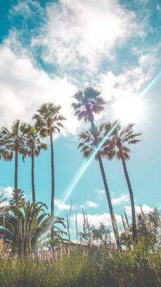 蓝天白云 椰树 自然美景 阳光