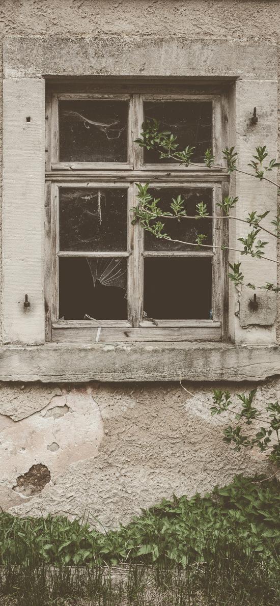 窗户 窗口 绿植 斑驳 怀旧