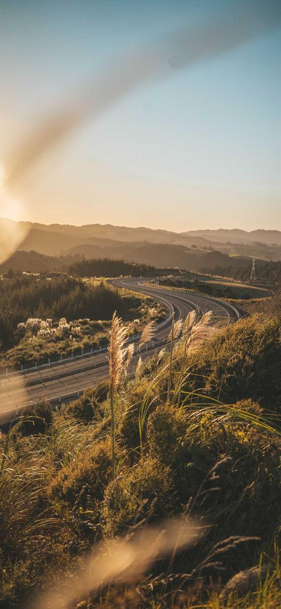 郊外 自然 芦苇 阳光 美景