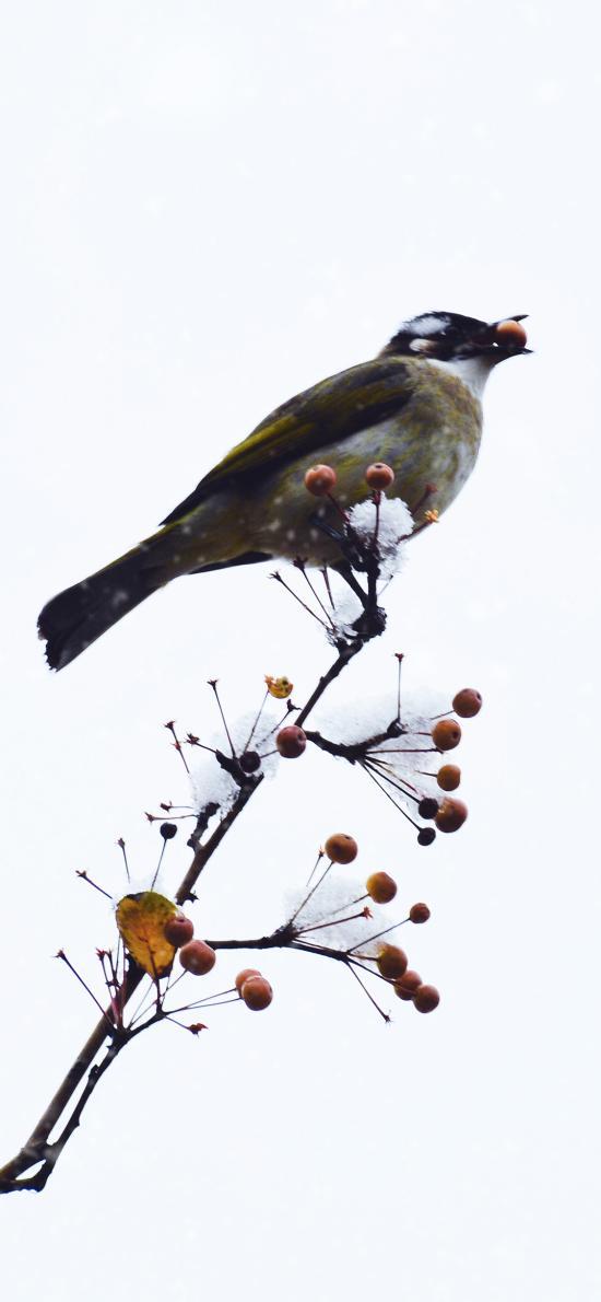 飞鸟 小鸟 枝头 果实