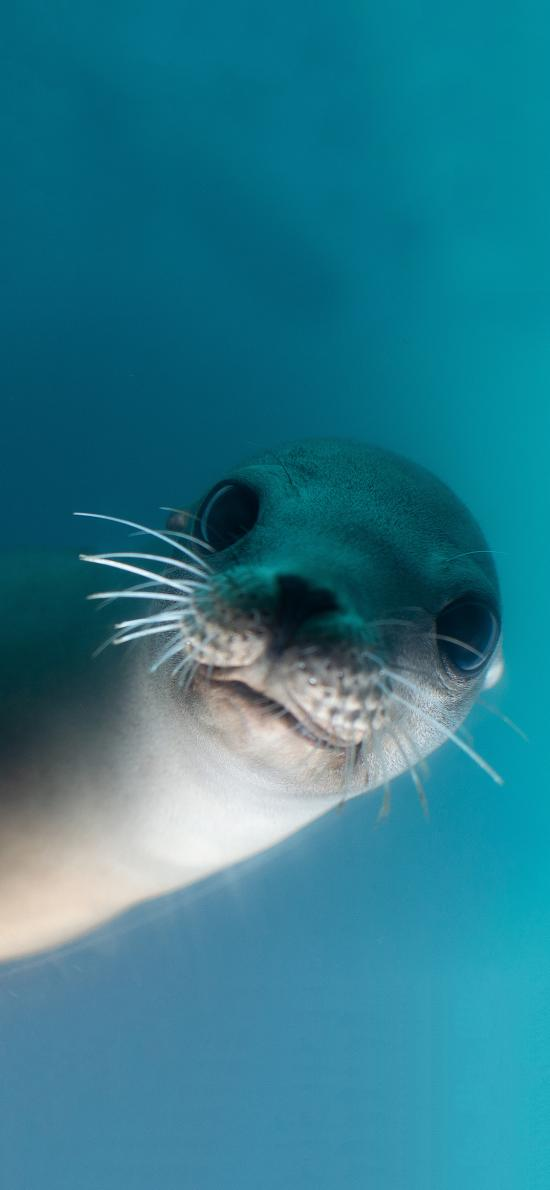 海豹 大眼睛 胡子 可爱