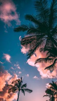 天空 唯美 椰树 运动 渐变