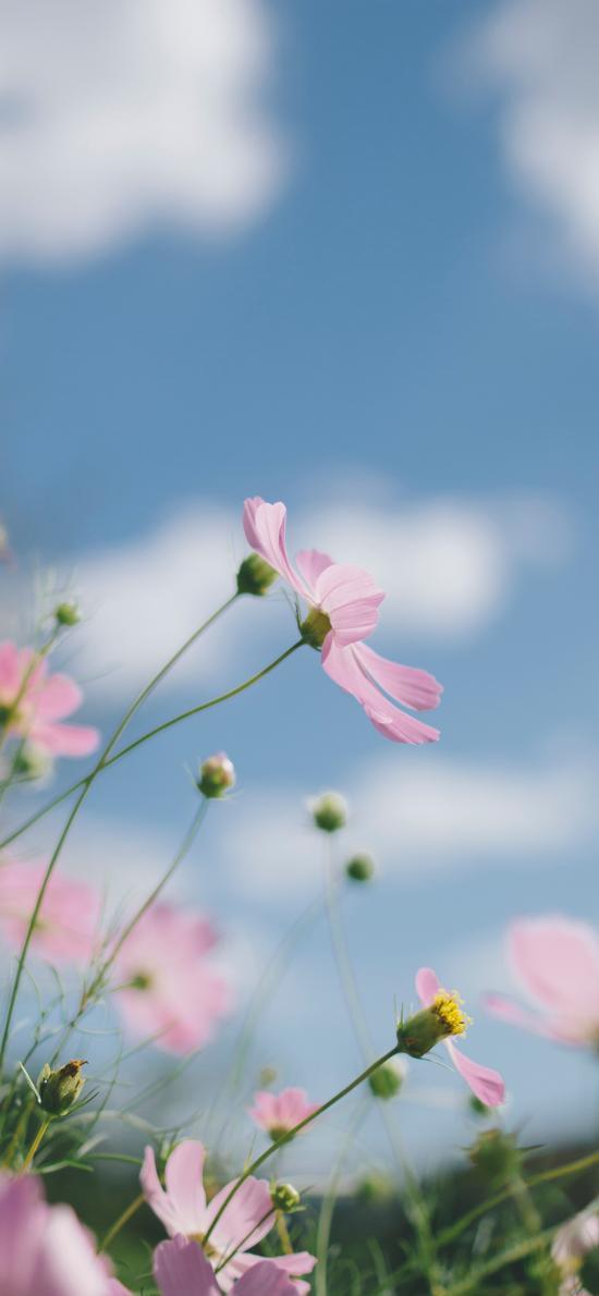草地 花丛 野花 户外
