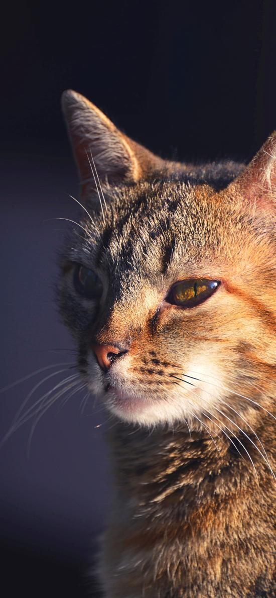猫咪 宠物 光线 皮毛