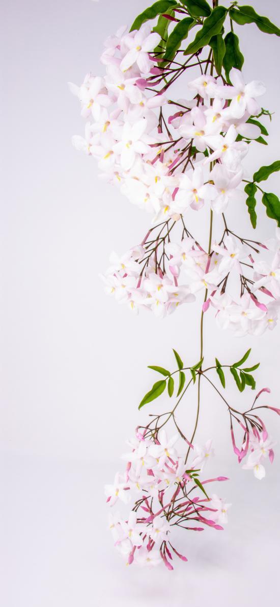 鲜花 花簇 枝叶盛开