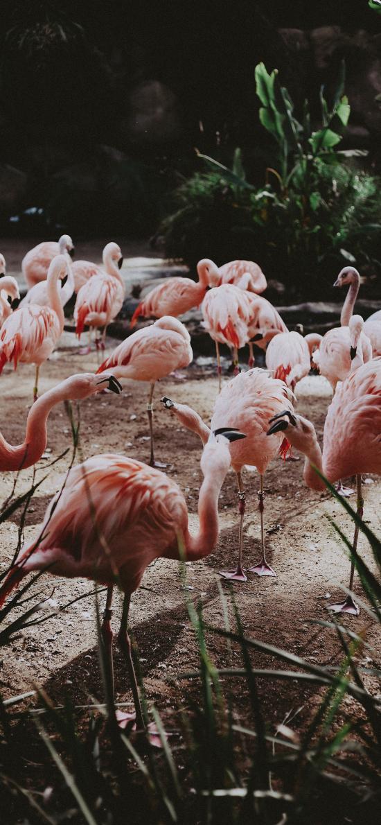 火烈鸟 群居 红鹳 栖息地