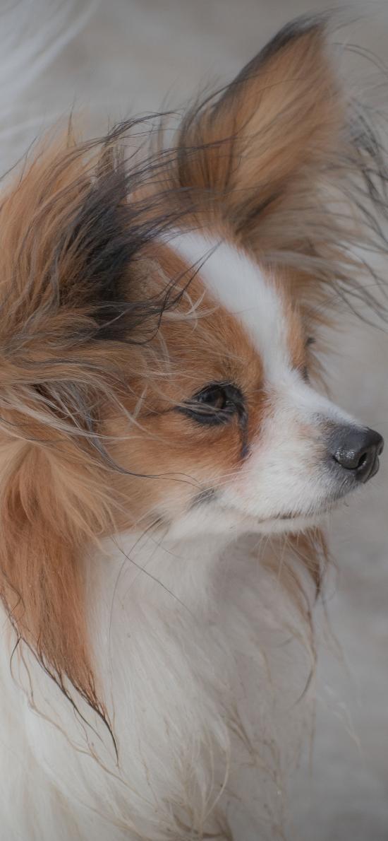 狗 宠物 犬 汪星人 毛发