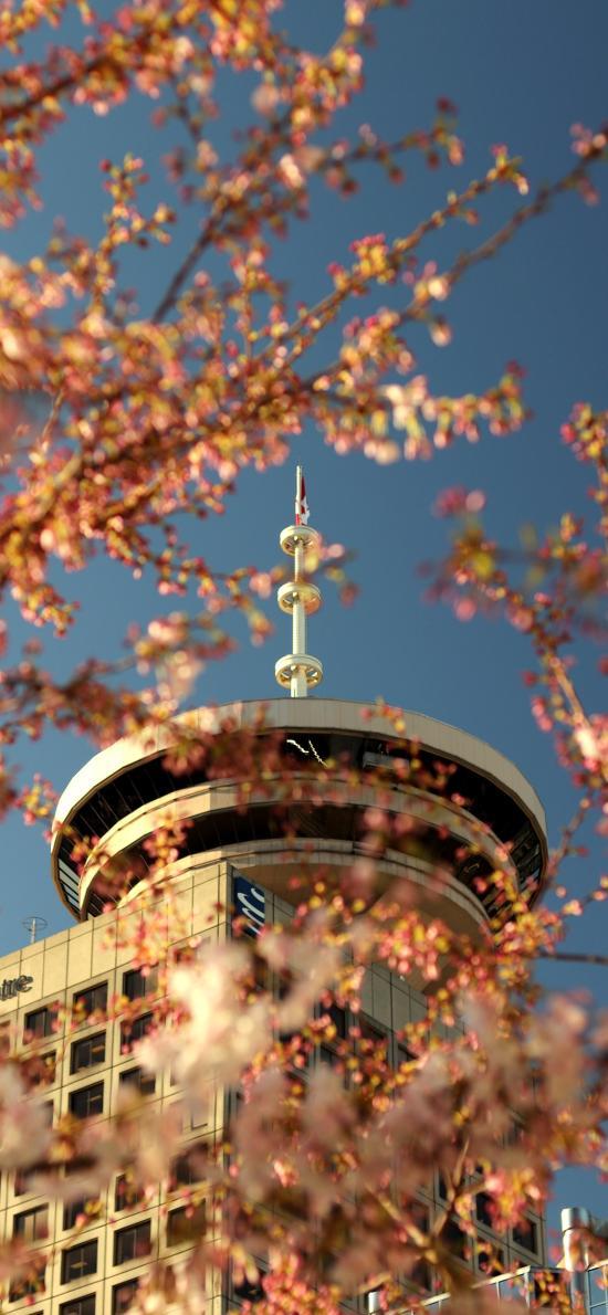 建筑 高楼 树木 鲜花