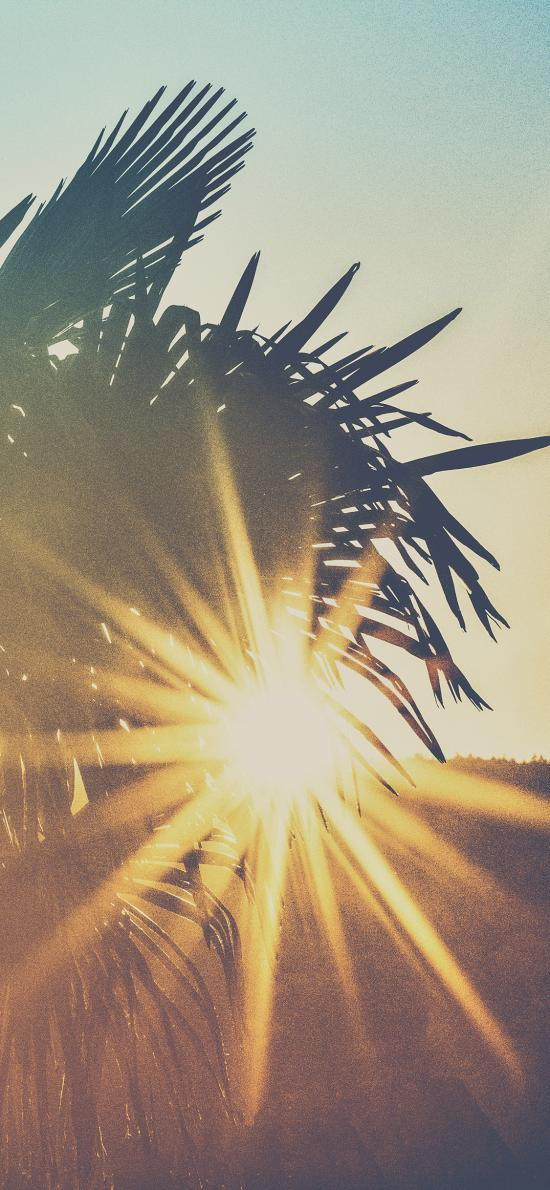 树木 椰树 阳光 灿烂