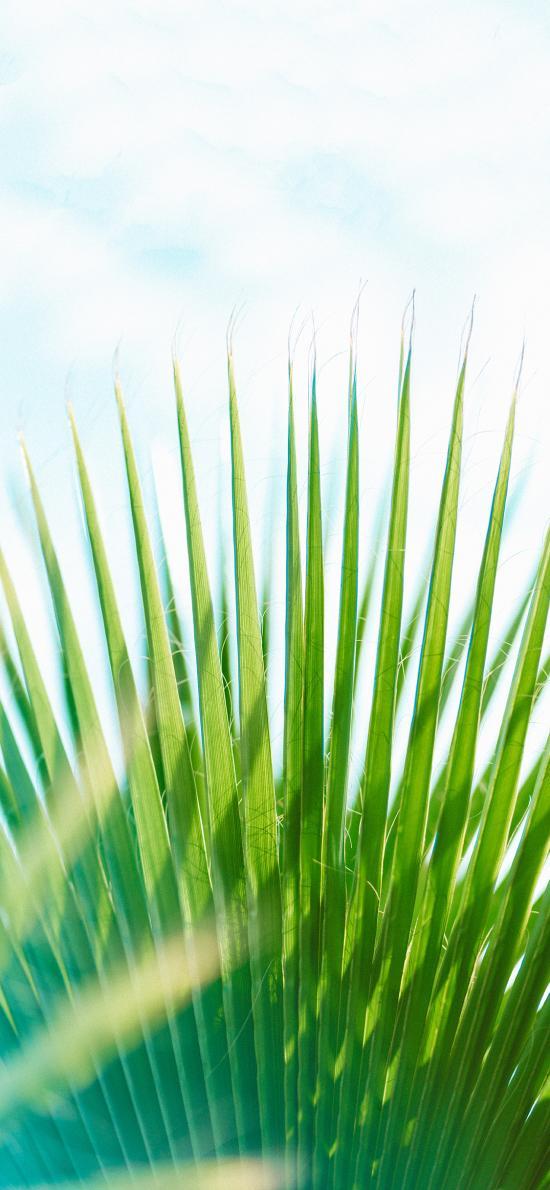 树木 叶子 凤尾叶 绿化