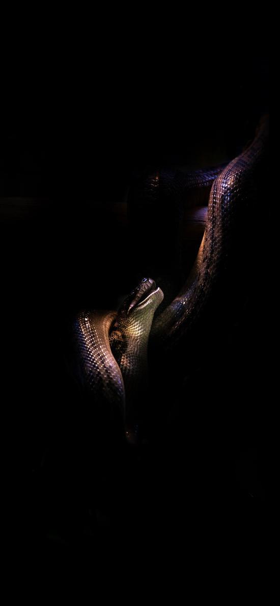 蛇 冷血 鳞片  爬行
