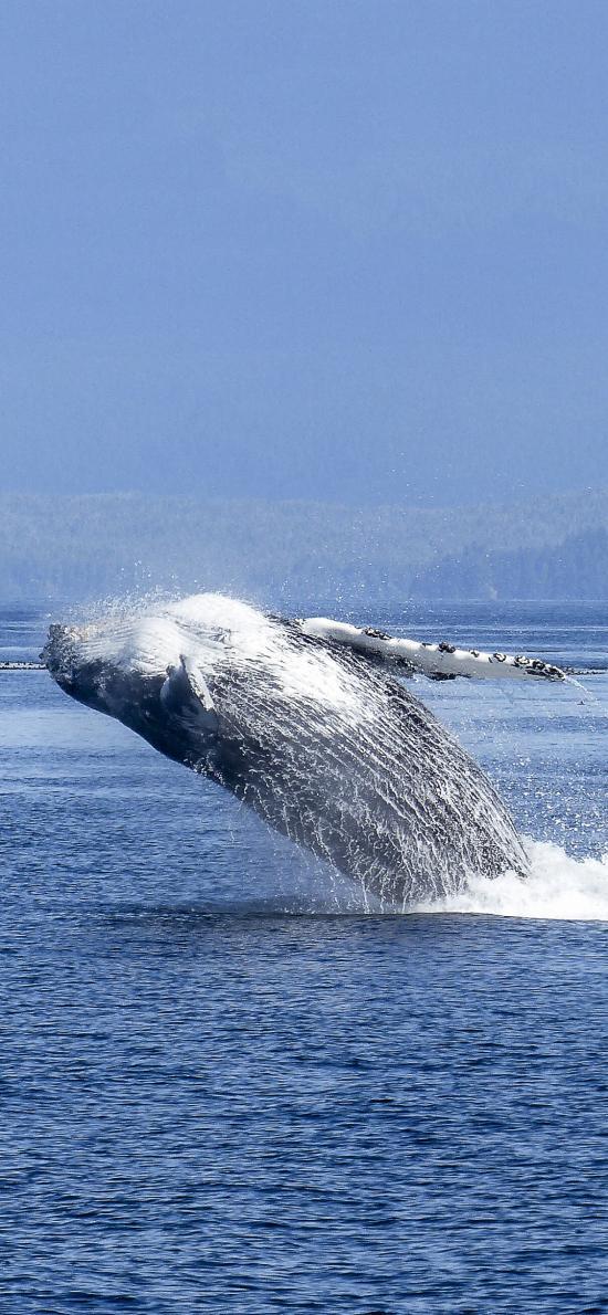 鲸 大海 海洋生物 海面 跳跃