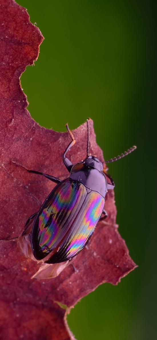 落叶 昆虫 甲虫 黑色