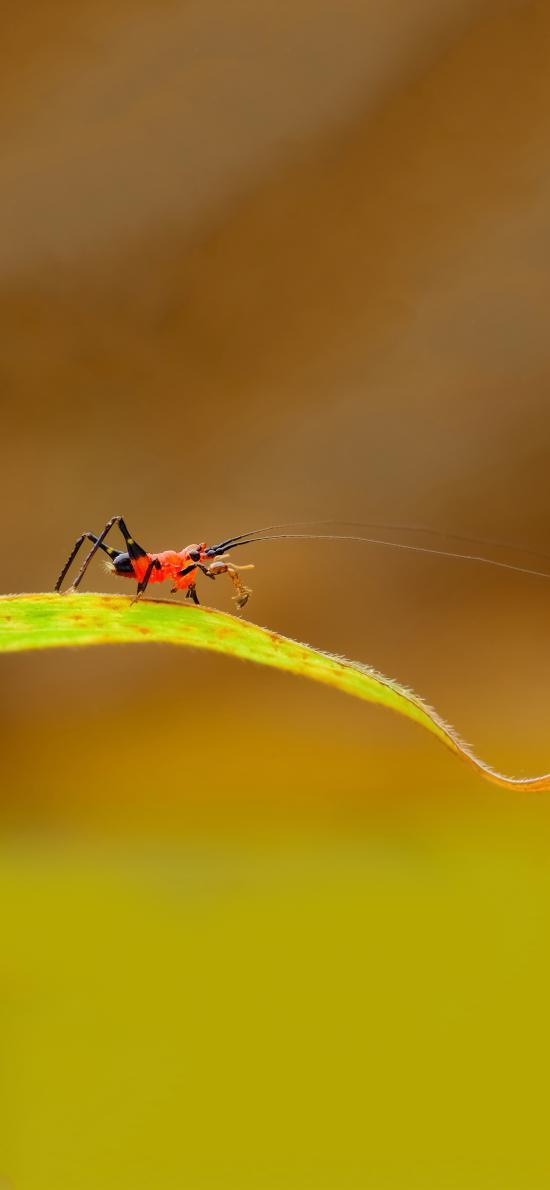 绿叶 昆虫 蚂蚁 红色 捕食