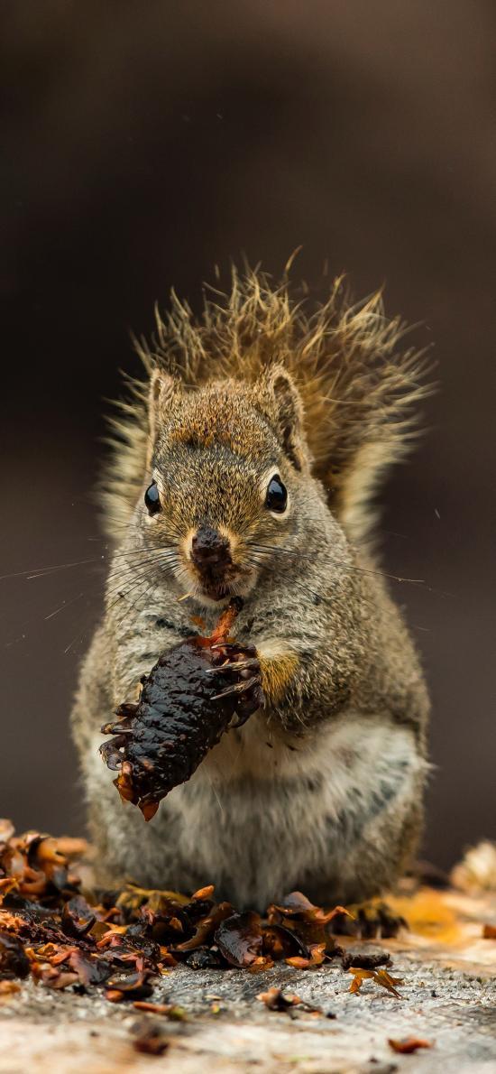 松鼠 觅食 果实 皮毛