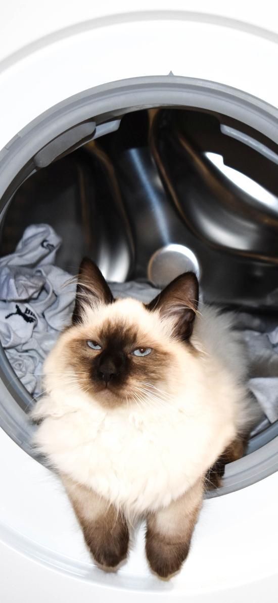 猫咪 喵星人 洗衣机 滚筒 宠物